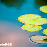 The subtleties in the lilly pad are nearly lost. A visible increase in color noise is also present in the water.