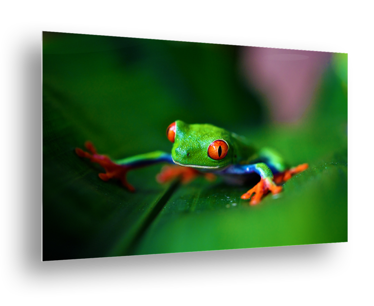 Metal Print of Frog on Leaf