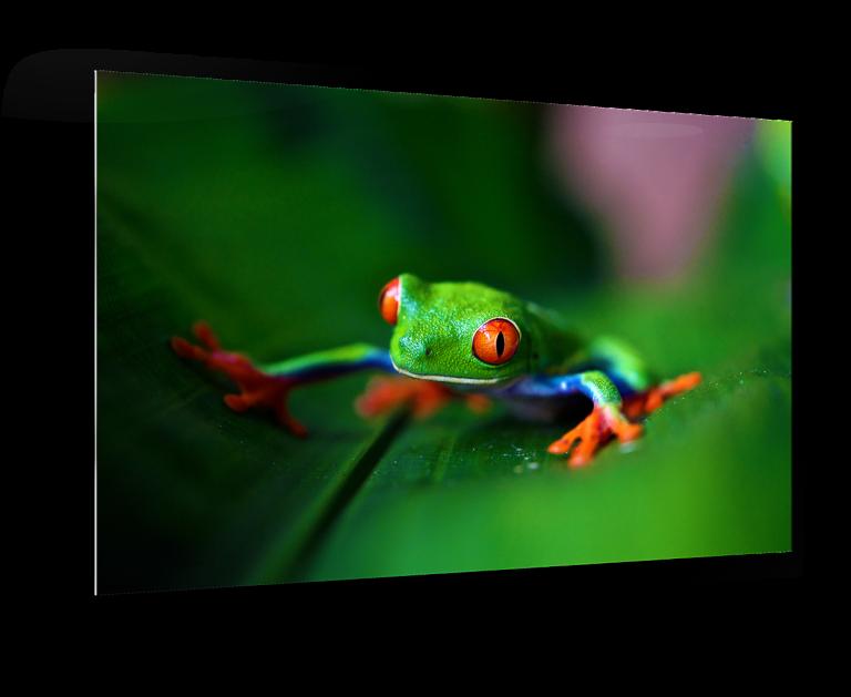 Metal Print of Frog on Leaf